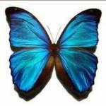 BlueButterflyQd Profile Picture
